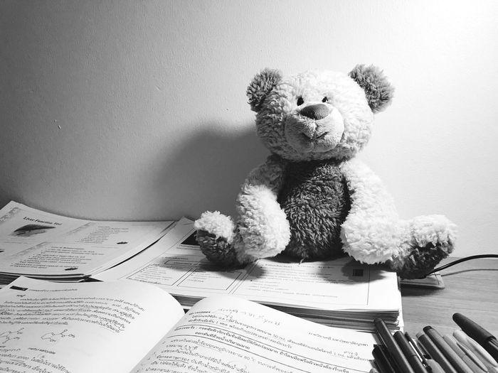 teddy teddy 🐻 ExamWeek