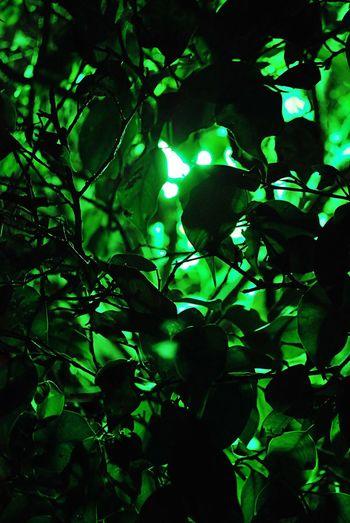 Exit Green Plant Secret Garden