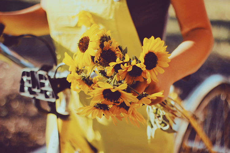 The last colors of Summer Bright Feel The Journey Sunflower Yellow Flower Yellow Leaves Bike Gear Geer Old Bike Overalls Sunflowers Sunset Vitage Yellow Yellow Bike Yellow Color Yellow Flowers Fresh On Market 2017