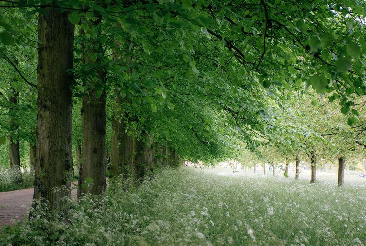 Footpath amidst trees