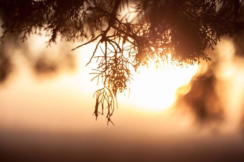 Close-Up Of Tree During Sunset