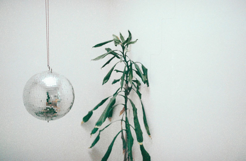 Berlin Christmas Christmas Decoration Christmas Ornament Close-up Day Disco Ball Empty Hanging Indoors  Nature No People Plants Need Water White Background White Wall