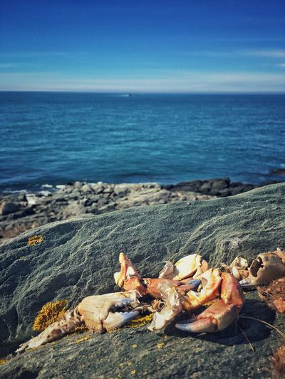 Sea Nature Horizon Over Water Beach Tranquil Scene Rock - Object Beauty In Nature Outdoors No People Scenics Day Water Tranquility Animal Themes Sky Mammal