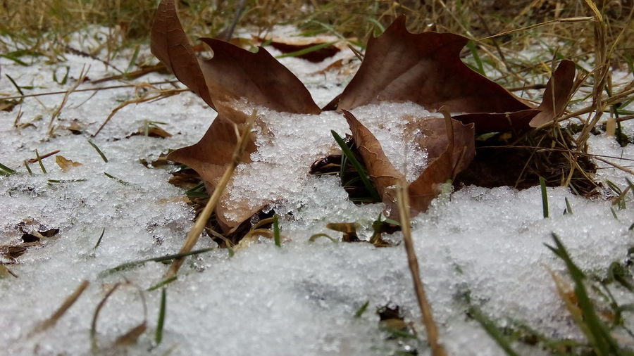Close-up of snow on ground during winter