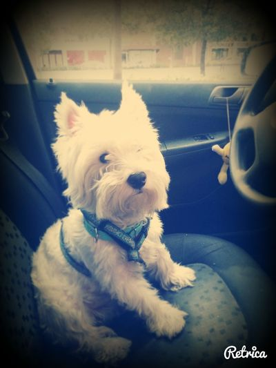 Mi Perro Amo A Mi Perro  La Cosa Masbonita♥ Te Amo ❤