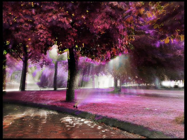 park Tree Flower Water Purple Sky