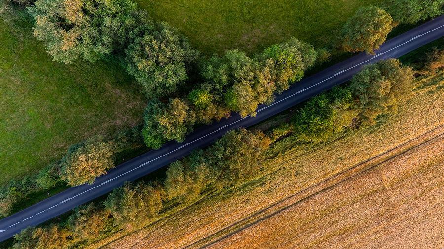 Drone  Tree