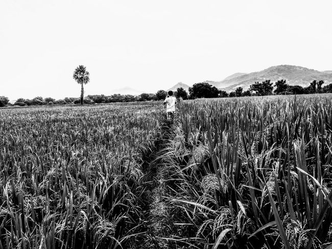 """""""A Farmers world"""" monochrome photography Blackandwhite Agriculture Nature Beauty In Nature Landscape Rural Scene Field Outdoors Tranquility Growth No People Day Sky Scenics Cereal Plant Tree Clear Sky Oil Pump Lost In The Landscape Black And White Friday Be. Ready. EyeEm Ready   Plant Crop  Tranquil Scene Shades Of Winter EyeEmNewHere Go Higher"""