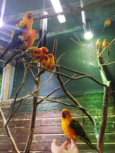 Busan,Korea Parrot Love Cool Summer Kamsamida