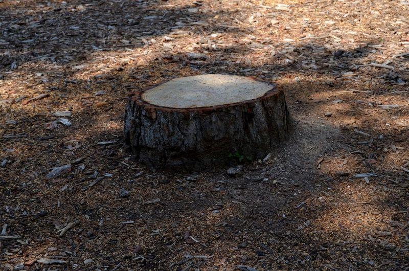 Tronco Tronco Cortado Deforestacion EyeEmSelect Tala De árboles Tree Ring Deforestation Tree Stump Firewood Pile Lumber Industry Concentric