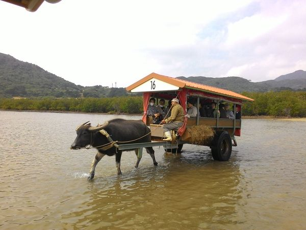 Buffolo Cart Domestic Animals Mammal Occupation Outdoors Transportation Water Let's Go. Together.