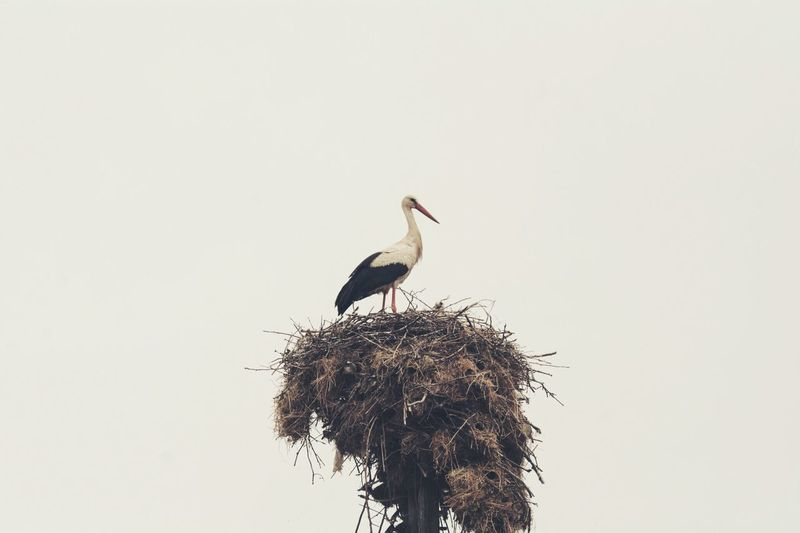 Low angle view of a stork perching on bird's nest
