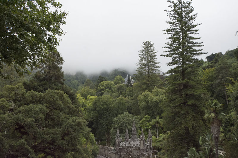 Architecture Castle Sintra Sintra (Portugal) Beauty In Nature Foggy Morning Growth Land Lush Foliage Outdoors Portrait Tranquil Scene Tranquility Tree
