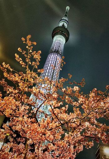 Sakura Skytree Tokyo Japan Water Nature High Angle View Plant Day No People Sunlight Tranquility Sea Outdoors Sport Underwater Beauty In Nature Autumn