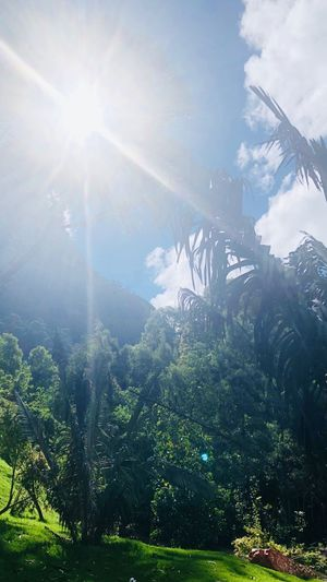 Bogotá Colombia Sunlight Sunbeam Tree Sky Lens Flare Plant Beauty In Nature Sun No People Day Scenics - Nature Low Angle View Outdoors Green Color Growth Tranquility Nature Cloud - Sky A New Beginning