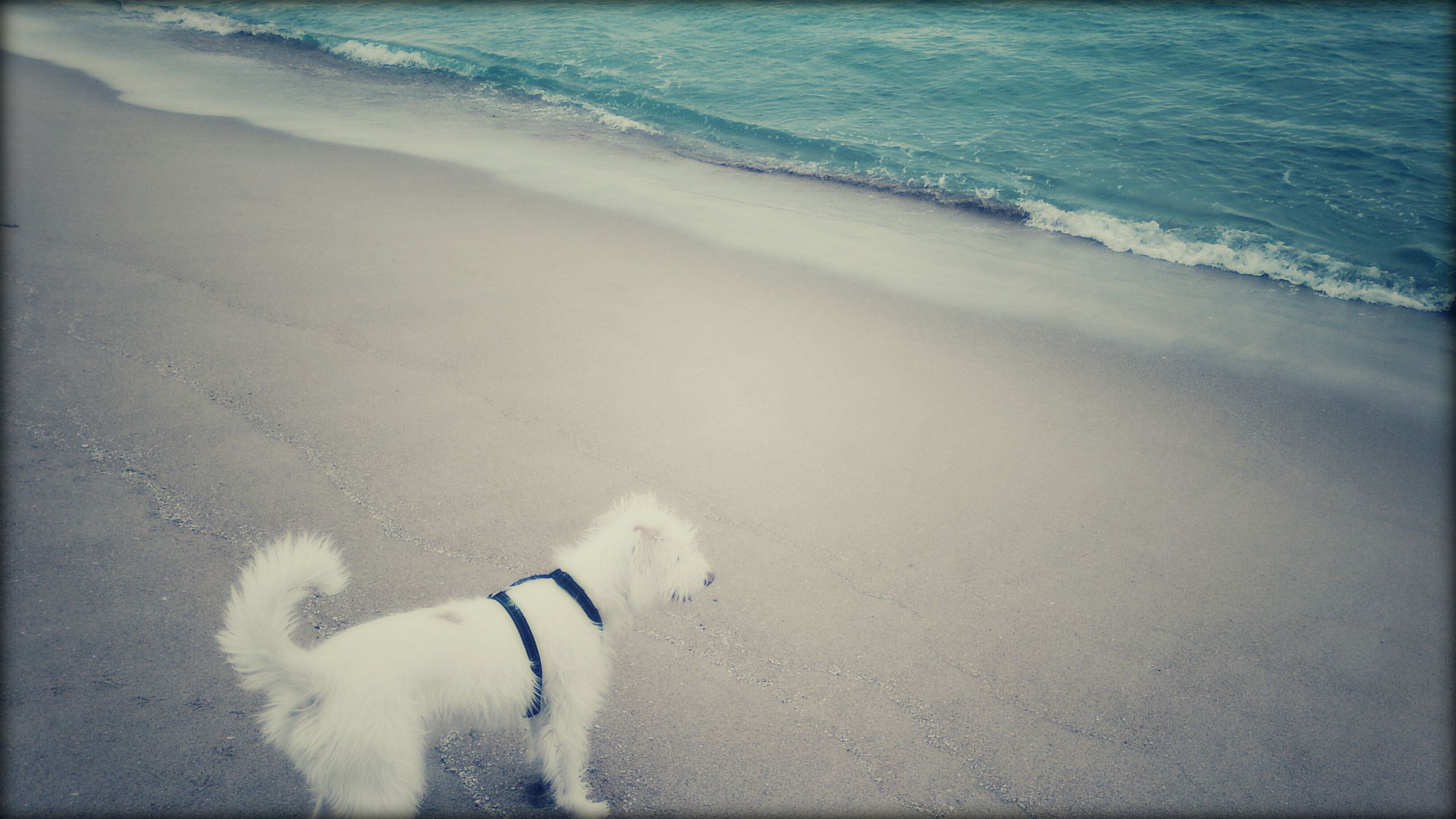 beach, sand, high angle view, dog, pets, lifestyles, sea, leisure activity, domestic animals, shore, mammal, shadow, animal themes, one animal, water, sunlight, men, full length