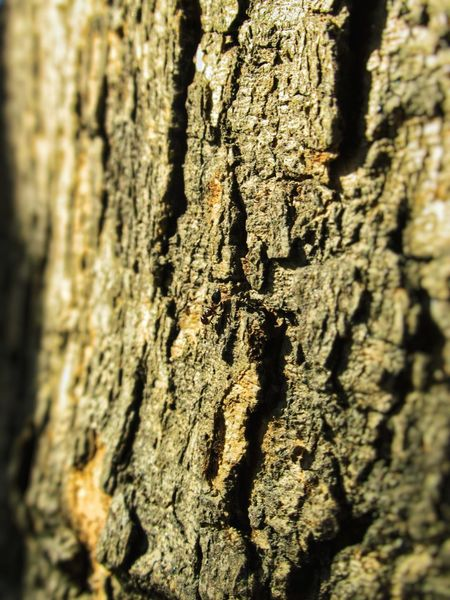 ant on a tree Ant Photography Nature Photography Natural Light Nature In Wild Natural Pattern Barks Of A Tree Bark Texture Textured  Tree Trunk Rough Close-up Tree Day Bark Cracked Backgrounds Full Frame Wood - Material Outdoors Nature Sunlight No People