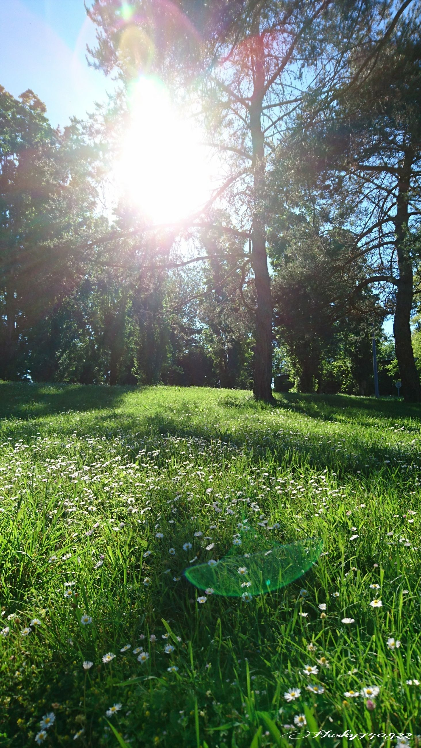 nature, tree, sunbeam, tranquility, grass, beauty in nature, growth, tranquil scene, sunlight, lens flare, scenics, bright, sun, green color, field, day, idyllic, landscape, no people, outdoors, branch, sky