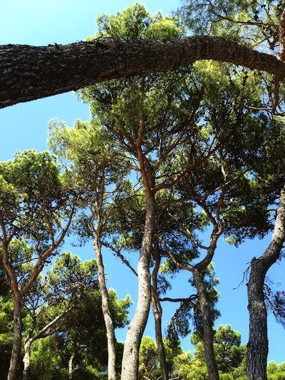 Pine Pine Trees Nature Sea Beach Summer Sun Relaxing ☀️🌲
