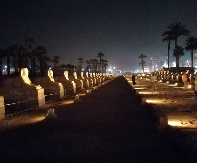 Avenue of the Sphinxes Night View Luxor Egypt Avenue Of Sphinxes Egypt Egyptian Monuments Karnak Temple Luxor Mut Architecture Diminishing Perspective Egyptian Culture Illuminated In A Row Night View Palm Tree Sphinx Sphynx Temple Of Luxor Temple Of Karnak The Way Forward