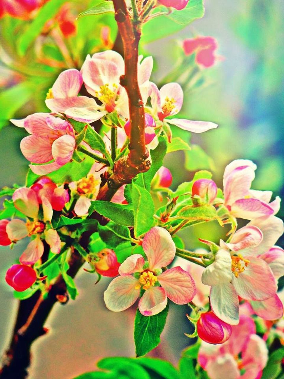 growth, nature, flower, beauty in nature, plant, no people, fragility, outdoors, pink color, freshness, branch, petal, leaf, close-up, day, springtime, blooming, tree, flower head