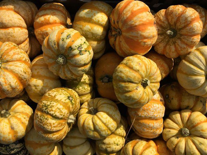 Full frame shot of pumpkins at market for sale on sunny day