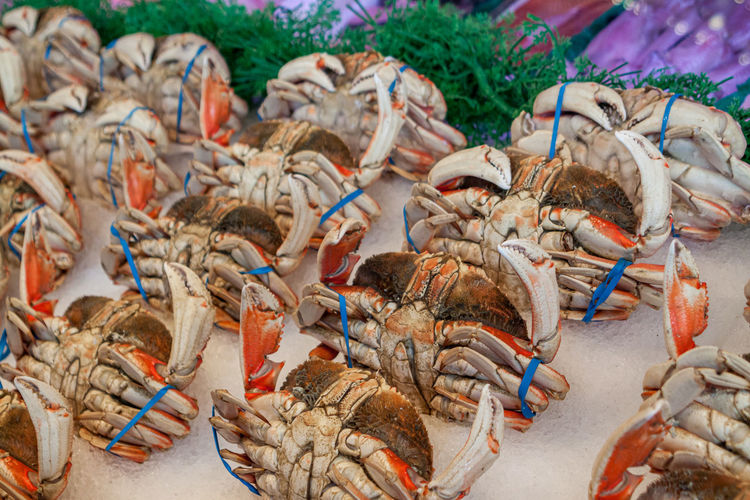 High angle view of crab for sale at market