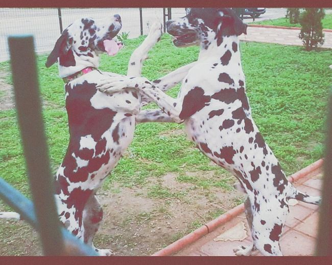 Danua Mydog Dog DogShow Happydogs HotDog 😅