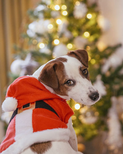 Portrait of a dog with christmas tree