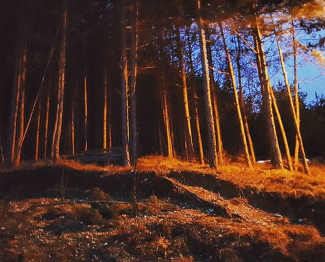 Magicwood Chillwithcrazies 09012016💕 Isprepadanidebili😂
