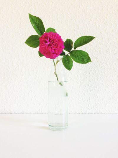 Fresh EyeEm Nature Lover Simplicity Plant Flowering Plant Flower Freshness Beauty In Nature Nature Vase Pink Color Close-up Petal