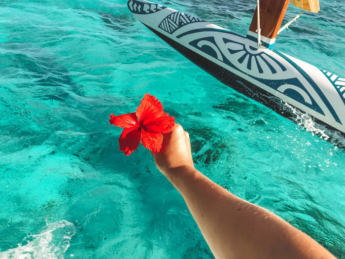 Cropped hand of person holding hibiscus in swimming pool
