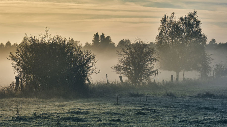 Foggy trees Tree Plant Sky Tranquil Scene Tranquility Land Field Beauty In Nature Scenics - Nature Nature Landscape Environment Fog No People Non-urban Scene Sunset Hazy  Growth Cloud - Sky Outdoors Freezing Sunrise