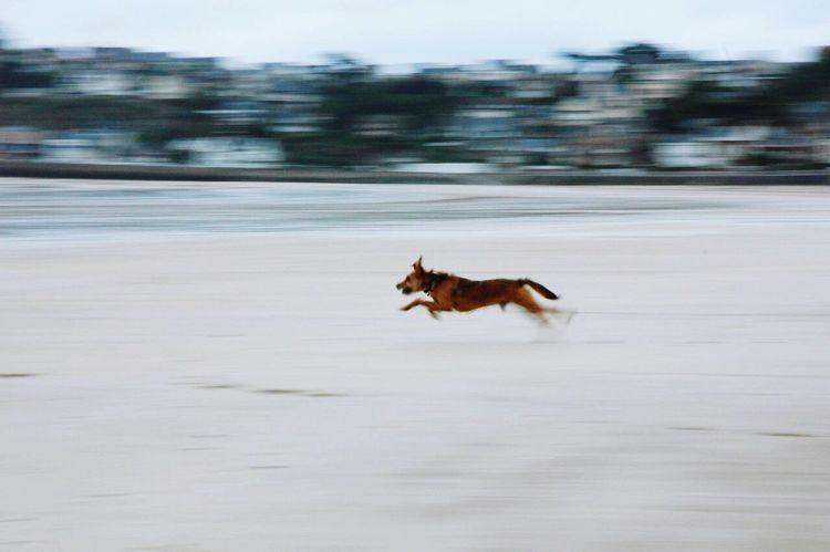 Speed Vitesse Dog Beach Animal First Eyeem Photo