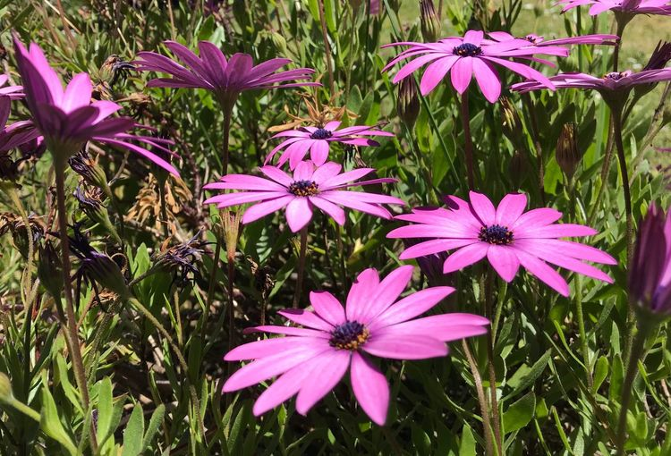 Plant Flowering Plant Flower Beauty In Nature Growth Fragility Vulnerability  Close-up Flower Head Nature Purple Pink Color