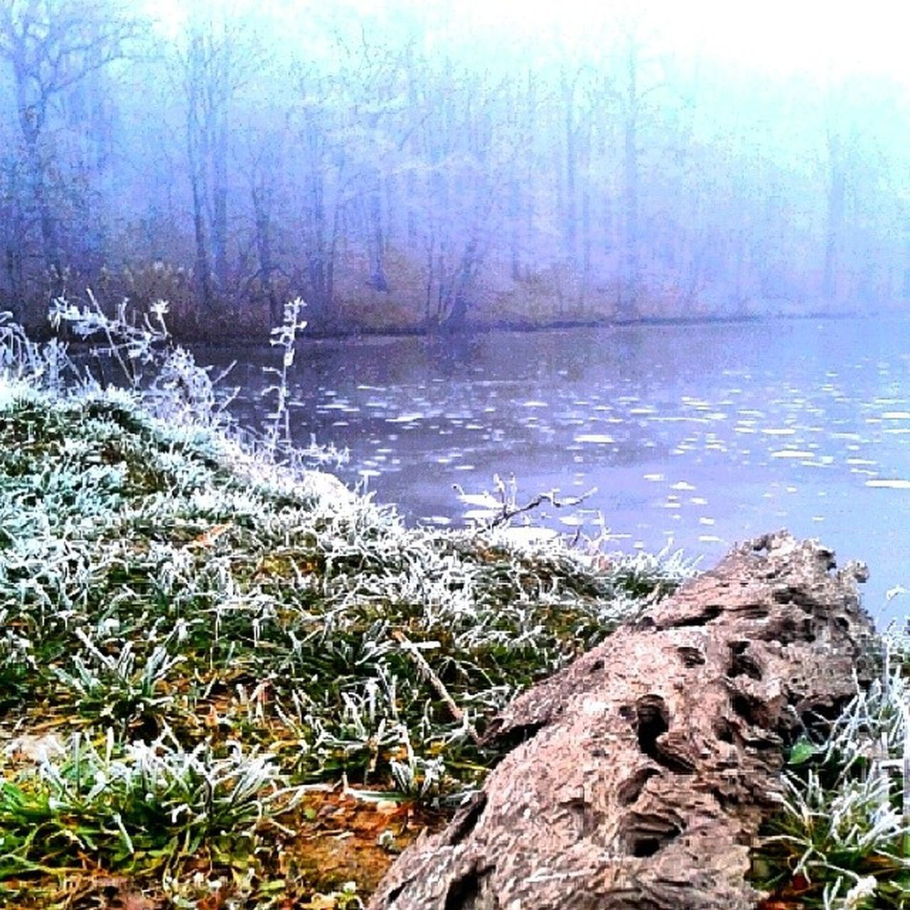 nature, tree, tranquility, tranquil scene, lake, water, beauty in nature, no people, outdoors, grass, growth, landscape, day, rock - object, plant, forest, scenics, tree trunk, winter, cold temperature, dead tree, sky