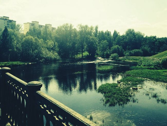 Nature Russia Summer Petrozavodsk