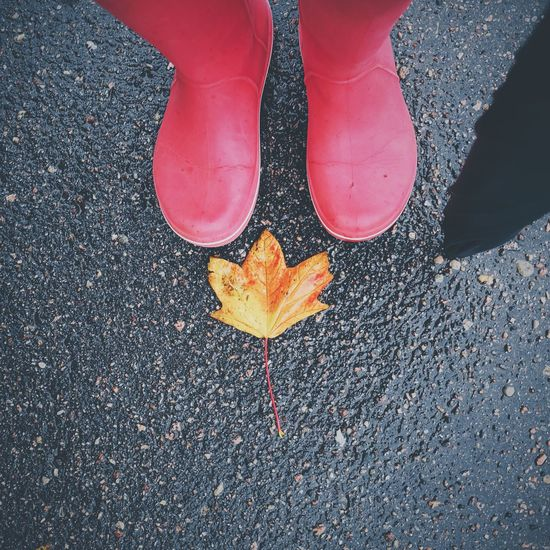 High angle view of red boots by leaf on road