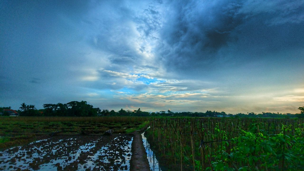 agriculture, field, farm, rural scene, growth, crop, landscape, nature, scenics, cultivated land, tranquility, tranquil scene, sky, beauty in nature, cloud - sky, outdoors, no people, day, plant, tree, plowed field