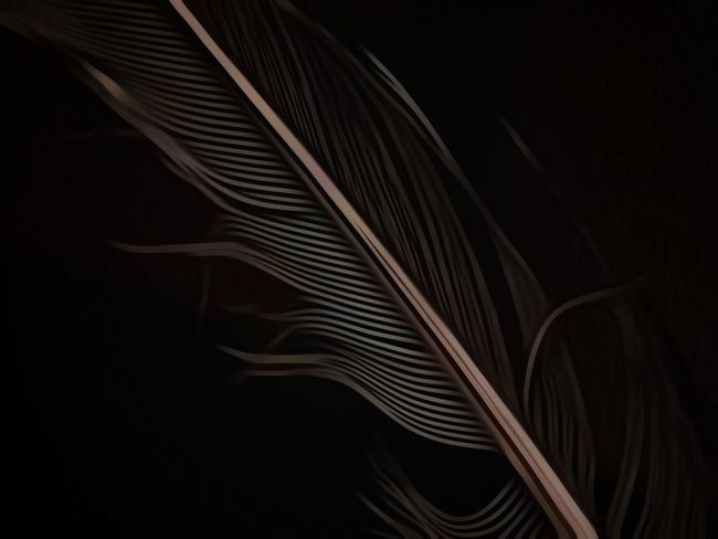 Plume... Dramatic Edit Feather  Monochromatic Low Key Lighting Dark Photography Samsung Galaxy S7 Macro Macro_collection In My Mind's Eye Creative Flair   Abstract Black Background Close-up No People Backgrounds Indoors  Fanned Out   EyeEm Ready