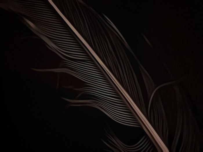 Plume... Dramatic Edit Feather  Monochromatic Low Key Lighting Dark Photography Samsung Galaxy S7 Macro Macro_collection In My Mind's Eye Creative Flair | Abstract Black Background Close-up No People Backgrounds Indoors  Fanned Out | EyeEm Ready   Visual Creativity The Creative - 2018 EyeEm Awards