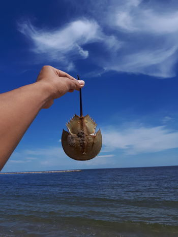Sea creatures Nature Sky Blue Blue Sky Summer Lifestyles Hand Sea Seafoods SEAFOOD🐡 View Seawater Seaweed At The Beach Horseshoe Horseshoe Crab Travel Destinations Travel Travel Photography Traveling Cloud - Sky Beach Human Hand Sky Vacations Sand