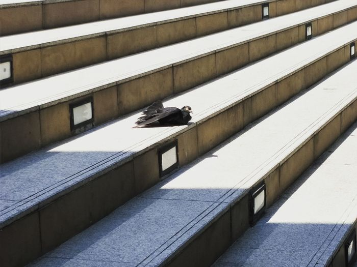 High angle view of pigeon on staircase