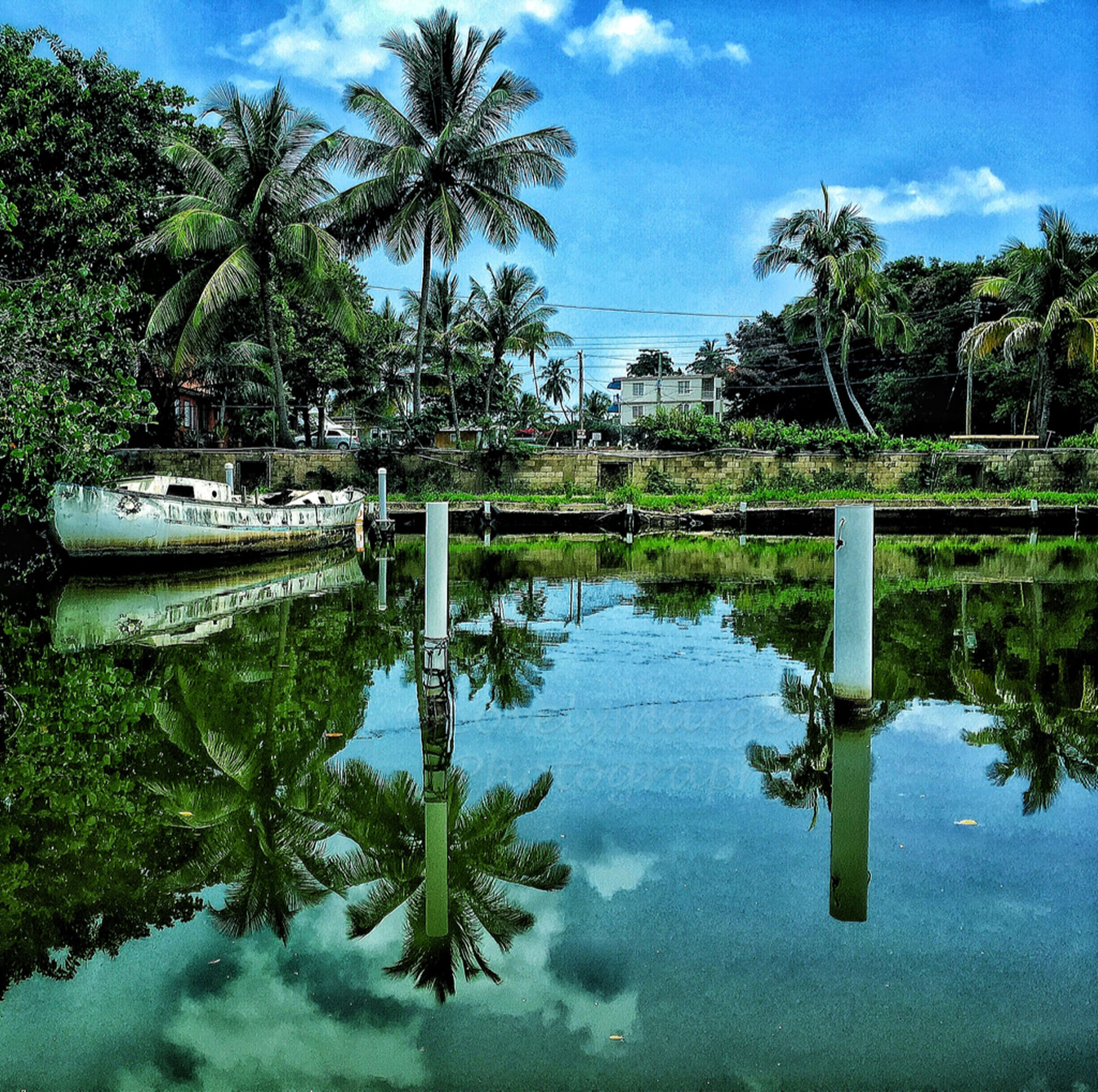 water, tree, palm tree, reflection, sky, tranquility, tranquil scene, lake, waterfront, nature, scenics, growth, beauty in nature, cloud, green color, cloud - sky, swimming pool, standing water, pond, blue