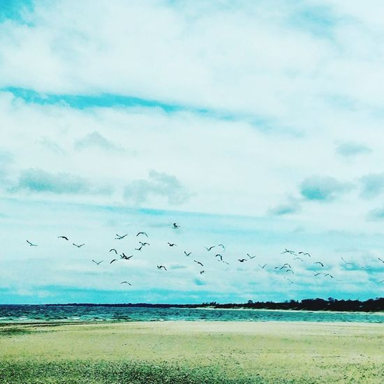 Sea Beach Bird Sky Nature Cloud - Sky Horizon Over Water Flying No People Outdoors Animal Wildlife Day Beauty In Nature Animals In The Wild Scenics Large Group Of Animals Flock Of Birds Landscape Water Animal Themes
