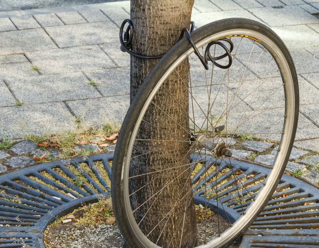 The wheel of a stolen bicycle still locked to a tree Bicycle Bike Close-up Crime Day Frustration Gone Locked No People Outdoors Parked Parking Remainder Security Stationary Stolen Surprise Theft Thief Tire Tree Wheel