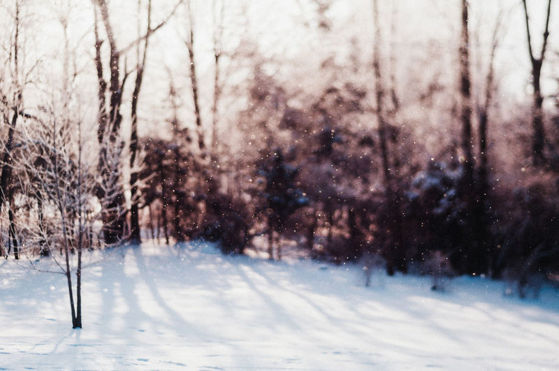 Winter Snow Cold Temperature Tree Plant No People Land Nature Tranquility Beauty In Nature Bare Tree Snowing Day Scenics - Nature Covering White Color Tranquil Scene Landscape Frozen Outdoors Extreme Weather Blizzard Freelensing
