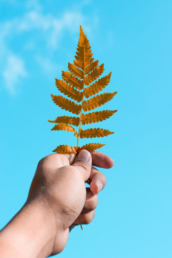 Human Hand Hand Human Body Part One Person Holding Finger Human Finger Personal Perspective Real People Body Part Unrecognizable Person Blue Nature Lifestyles Studio Shot Sky Food Close-up Day Outdoors Blue Background Human Limb Fern Leaf Autumn