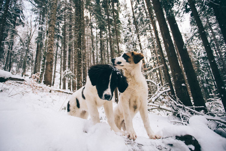 Animal Themes Beauty In Nature Cold Temperature Day Dog Domestic Animals Forest Mammal Nature No People Outdoors Pets Scenics Sky Snow Tree Tree Trunk Weather Winter