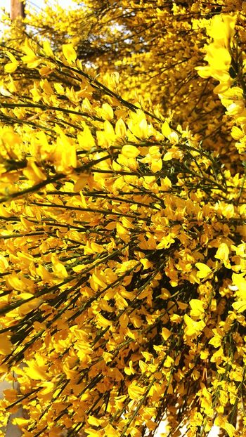 Yellow Beauty In Nature Nature Freshness Close-up Outdoors Day Flowers